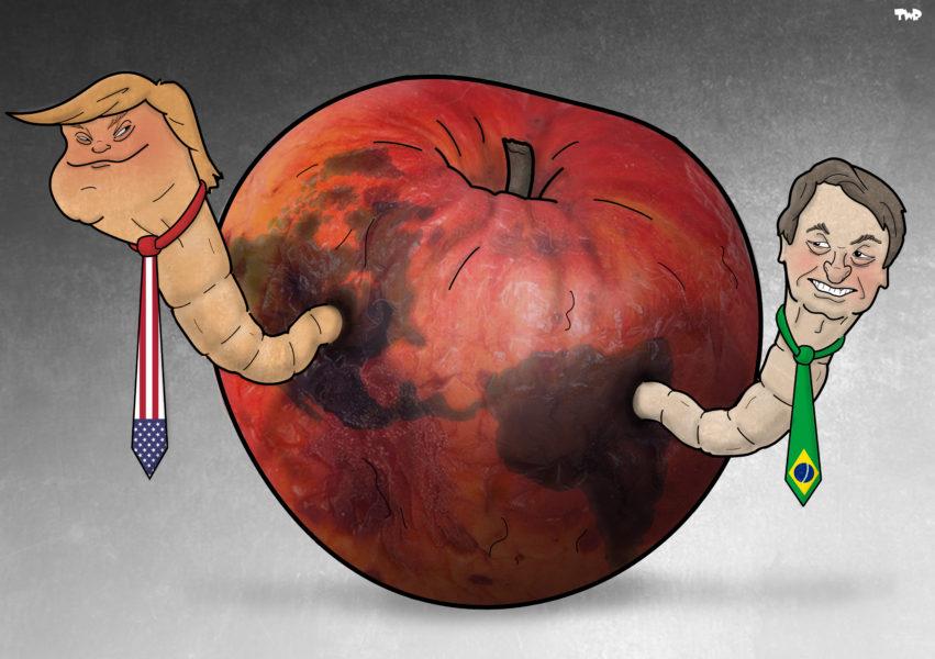 TJEERD ROYAARDS (Pays-Bas / Netherlands), Cartoon Movement